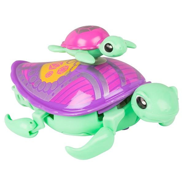 turtle_single-pk_jules.jpg